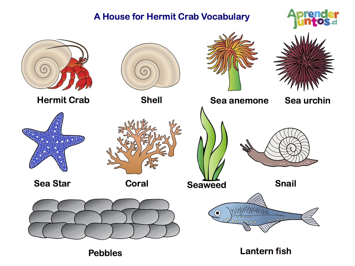 Hermit Crab Vocabulary copia