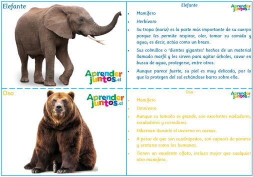 Ficha de animales